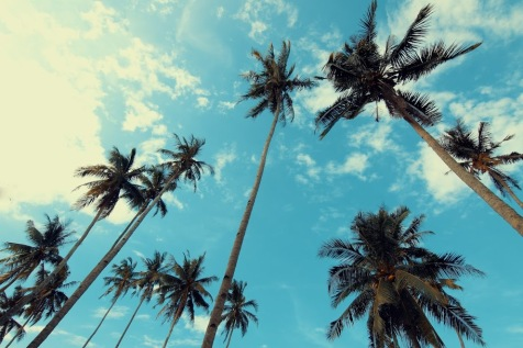 coconut-trees-low-angle-shot-palm-trees-1260820